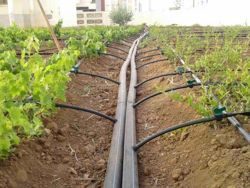 Irrigation Installers Near Me